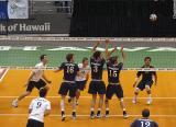 sportsvolleyball06.jpg