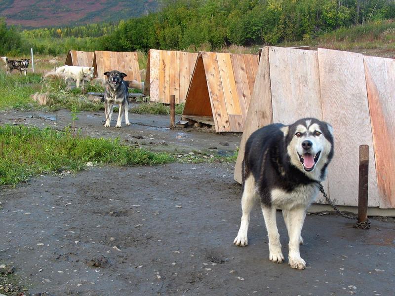 Working dog lot