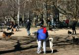 Washington Square Park Dog Run