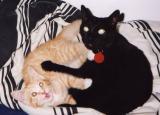 Raven & Janis (RIP) 2002-2003 & 1993-2003