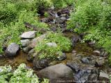 Creek near Box Canyon