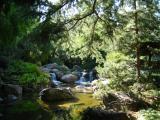 Bonfante grove