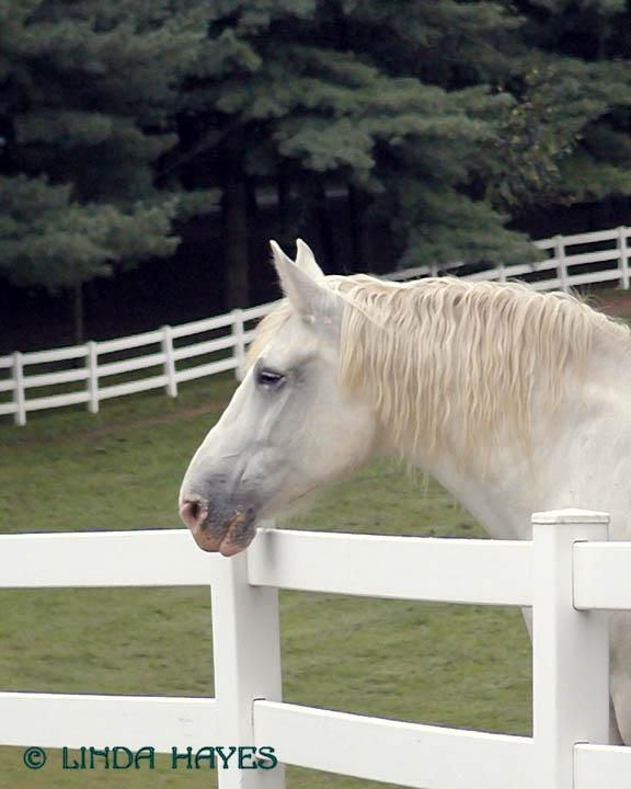White Horse at Valhalla 477