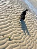 Rosie, a beach and a tennis ball