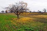 A Tree II