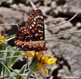Merri's Bugs and Butterflies