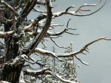 Winter Accent
