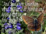'II Samuel 23:16' slide from the Butterfly series