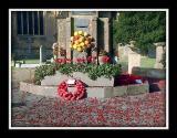 War memorial and poppies, Martock