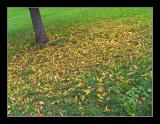 Autumn [5-Nov-2004]