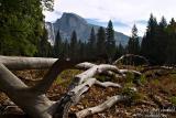 Moments Captured = Yosemite