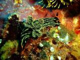 Diving Sabang