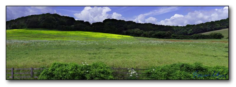 Rapeseed Panoramic : Week 5