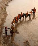 horse monk1178-5 copy.jpg