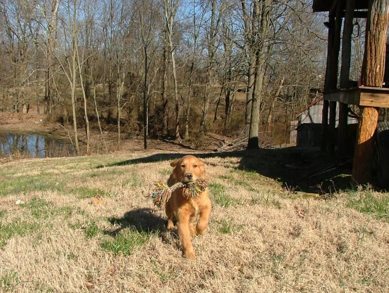 Rusty playing fetch