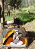 2004 Martina at camp in Colorado watched by deer