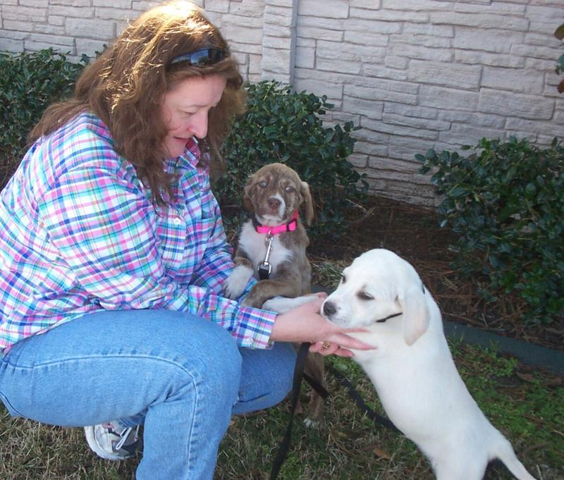 Angie, Brownie and Klondike