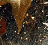 Web-covered leaf