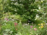 front perennial garden