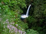 Metlako Falls and Wildflowers