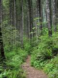 Eagle Creek Trail in Forest