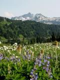 Flowers and Tatoosh Range