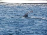 Day Four: Humpbacks!