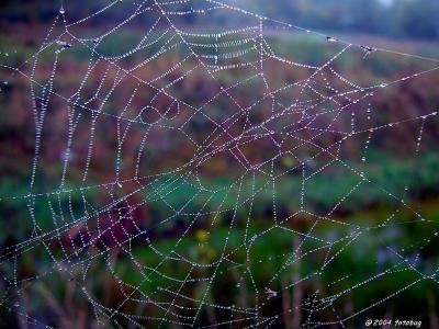 Spider engineering
