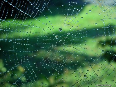 Reflections on the web