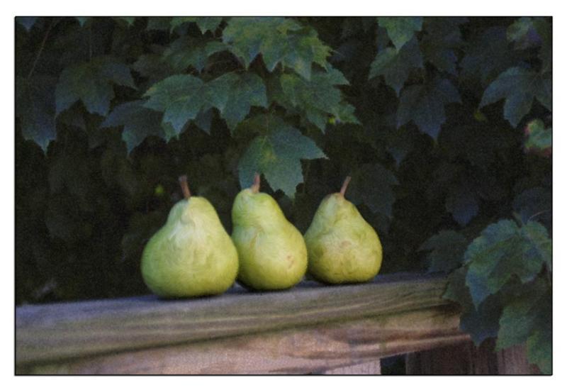 : Pears on Railing :
