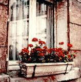 : Paris Windows :