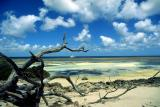 Fantasea 2 of Aldabra beach