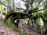 Envie de changer de forêt!