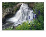 *Flowers & Falls*