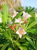 Flowers - Eau Gallie, Florida