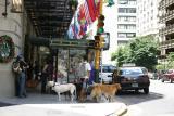 Buenos Aires- Hombre con perros