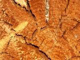 040731 Fallen Log