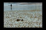 Walk in low tide