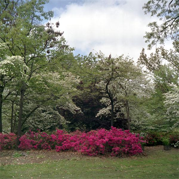 Woodward Park in Springtime