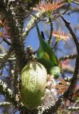 ca_nonnative_birds