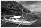 Shark Tagging @ Eagle Point, Batangas  in BLACK &WHITE