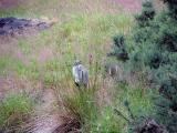 Ireland 057_bird_Glendalough.jpg
