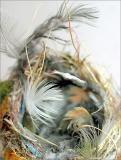 nest 001w.jpg