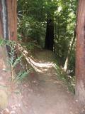 Berry Creek Fall Hike - 08/08/04