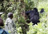 Gorillas and guides