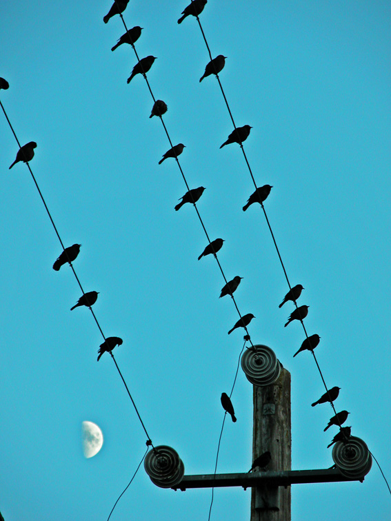 Moon Wire (Petaluma, CA)