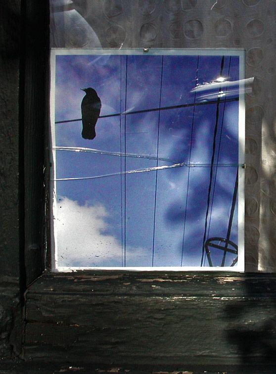 Window Photo (Portland, OR)