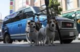 Dogs Life on the street.jpg