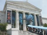 Lets go see the sharks at the Shedd Aquarium