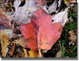 Just a leaf...